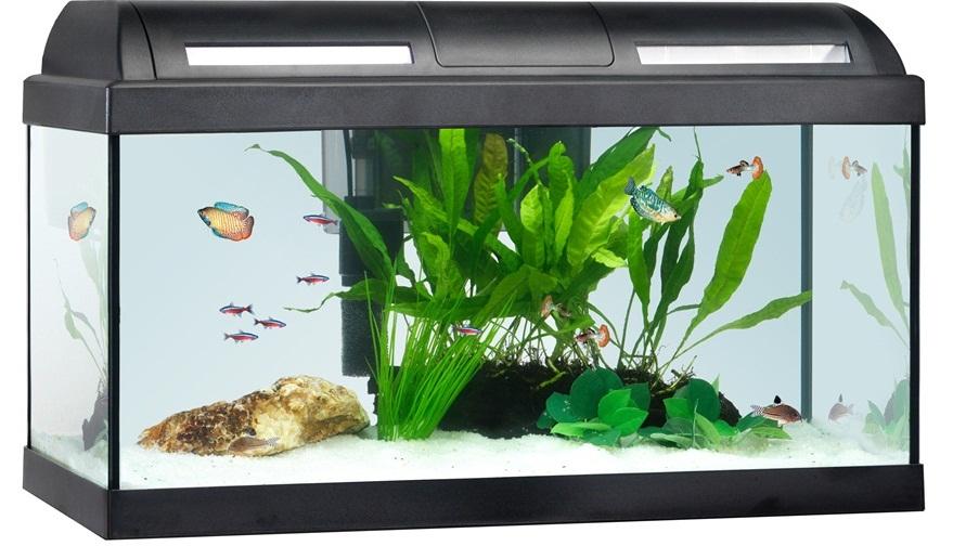 nice fish tank