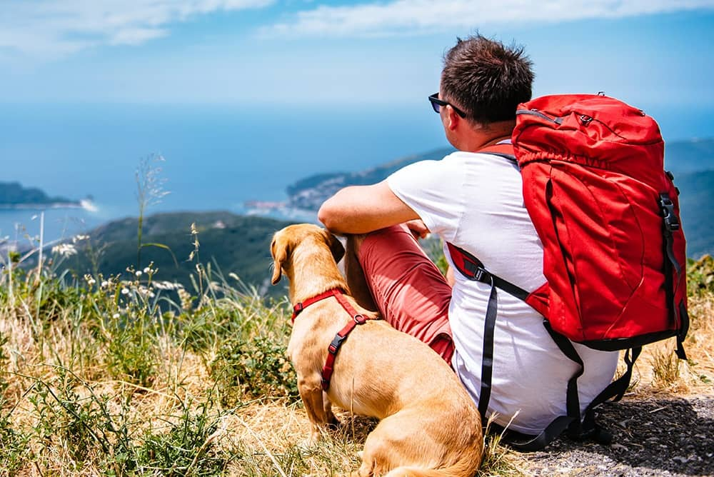 Tips To Make This Summer Pleasant And Amazing For Your Pet