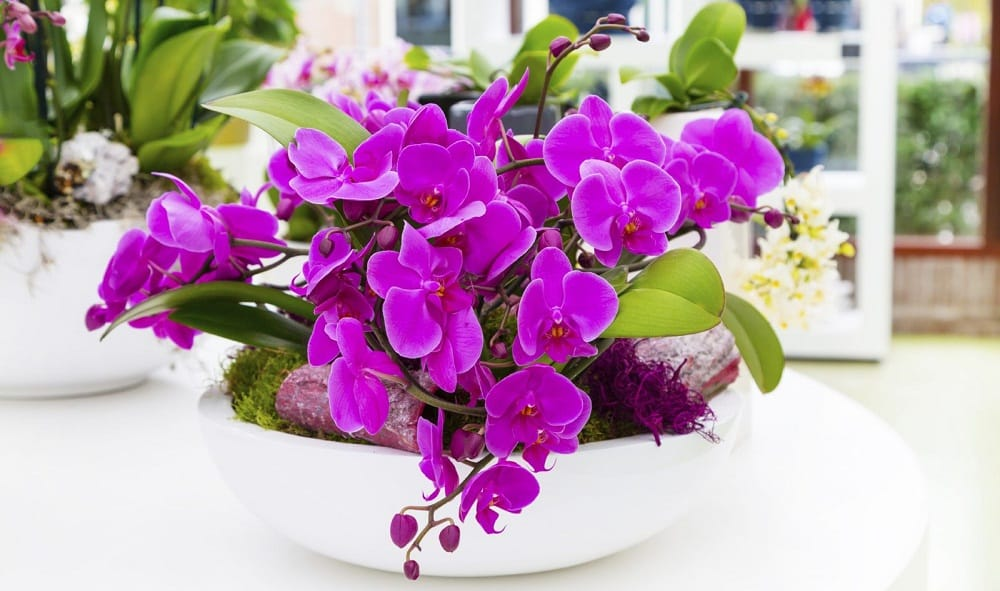 Orchids look more exotic