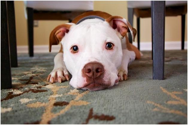 good-quality-carpet