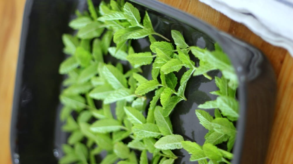 How to dry fresh mint